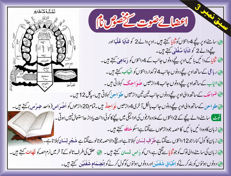 Tajweed Rules In Urdu-teeth names in tajweed-Makhraj of Arabic Letters