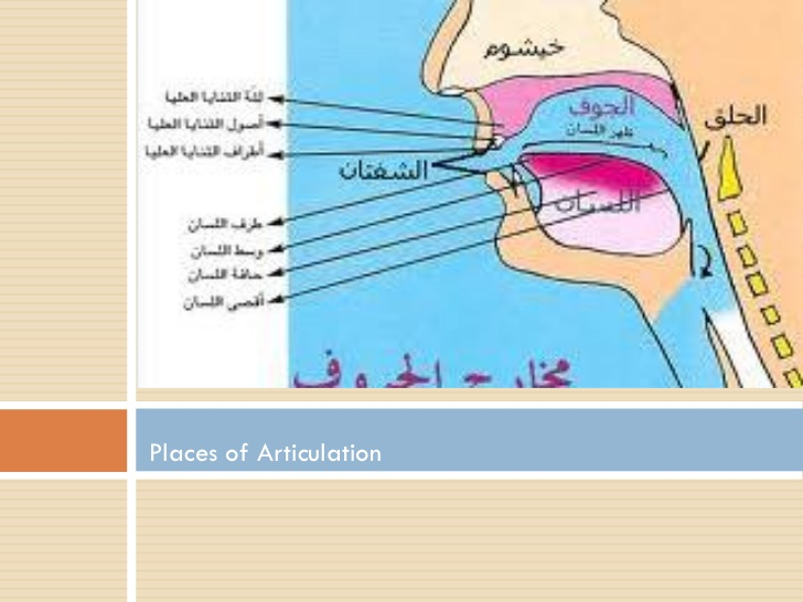 place of articulation chart in English