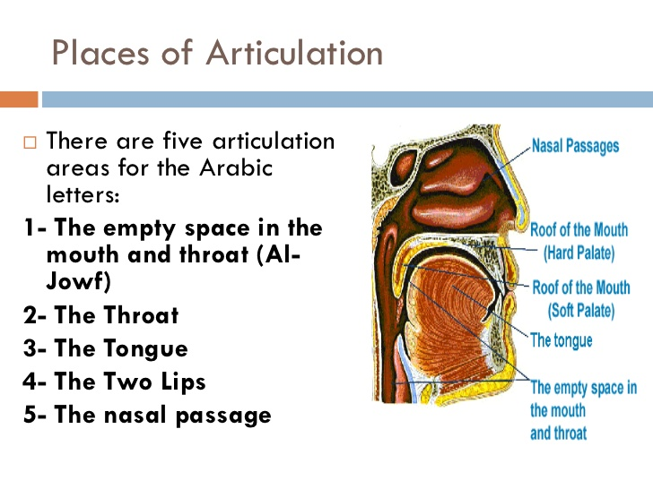 manner & place of articulation chart examples and definition